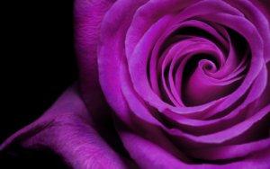 violet-007